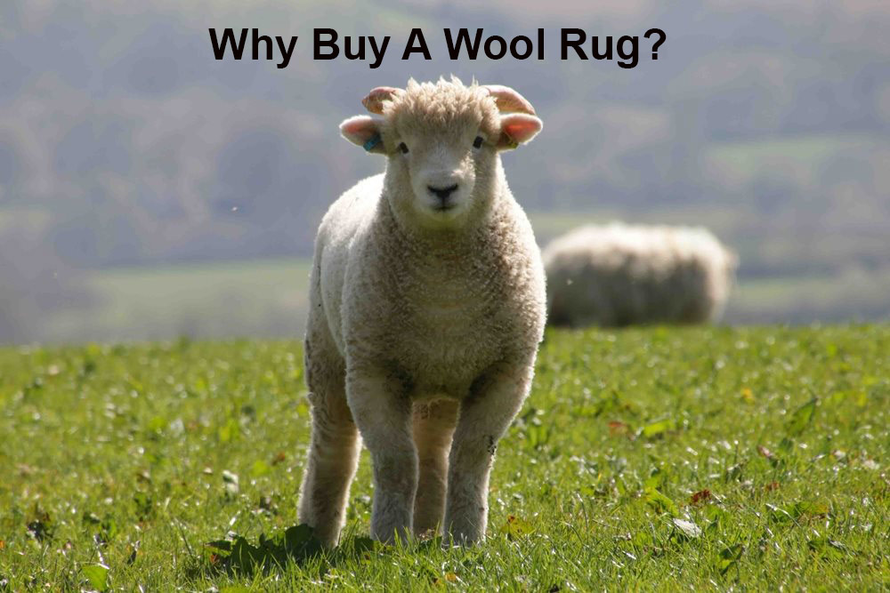 What is so good about a wool rug and why are wool rugs so highly regarded?